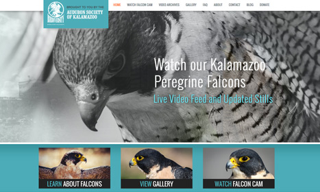 Peregrine Falcons - - Website Design by Blue Fire Media